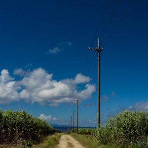 Road in sugar cane field