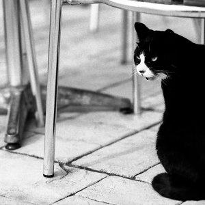 Cat sitting under chair