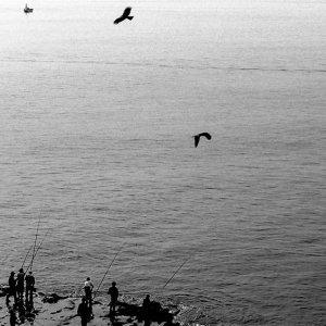 江ノ島の鳥と釣り人