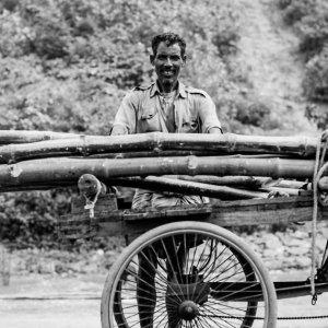 荷台に木を載せる男