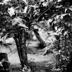 Cat in bush