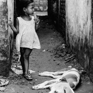 不安そうな女の子と二匹の犬