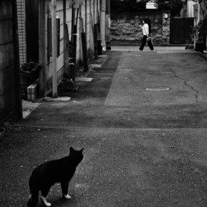 歩行者を見る猫