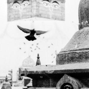 Stupa and pigeon