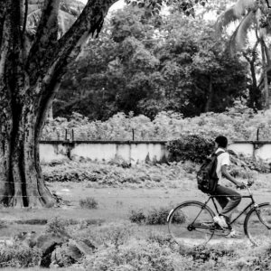 Bicycle passing by big tree