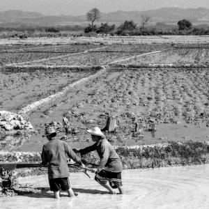 田圃で働く男