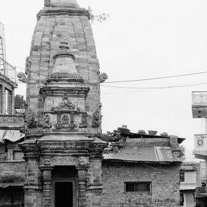 ヒンドゥー寺院の前の犬