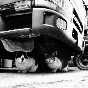 トラックの下で寛ぐ猫