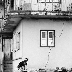 ベランダの女性と屋根の上の犬