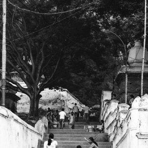 階段の上の女たち
