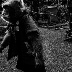 紐で繋がれた猿回しの猿