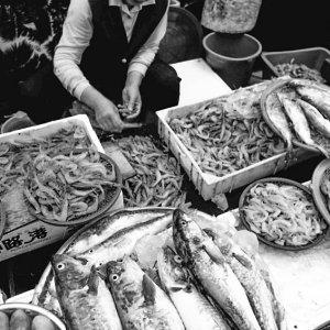 束草の魚市場で働く女