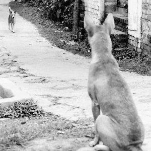 仲良しの犬が来るのをおすわりして待っていた犬