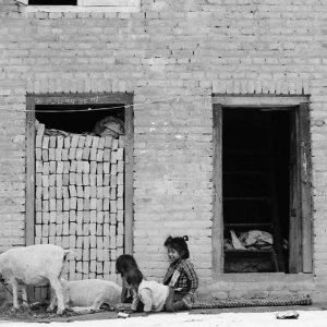 Kids playing with sheep