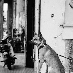 行儀よくおすわりする犬