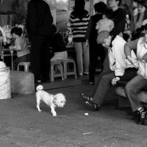 Dog strolling