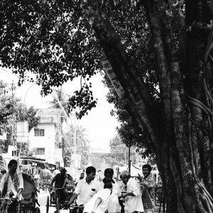 Banana seller in tree shade
