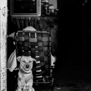 Dog guarding master