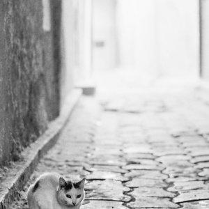 薄暗い路地にいた猫