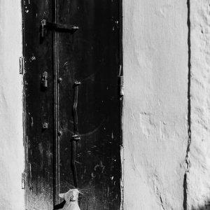 Cat looking up in front of the door