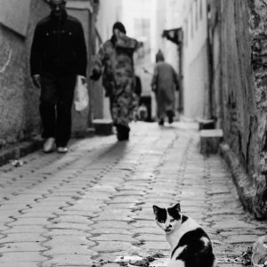 Cat ramping