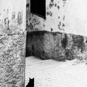町角で様子を窺う猫