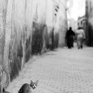 Cat looking back in lane