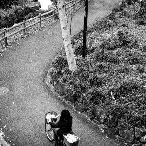 曲がりくねった小道を走る自転車