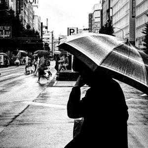 大通りの傘