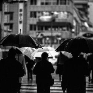Many umbrella in Hamanomachi