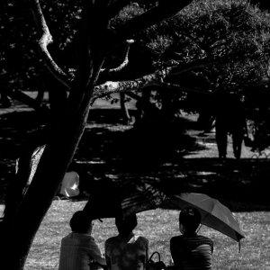木陰に座る三人