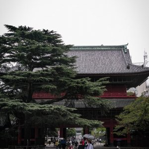 増上寺境内を歩くカップル