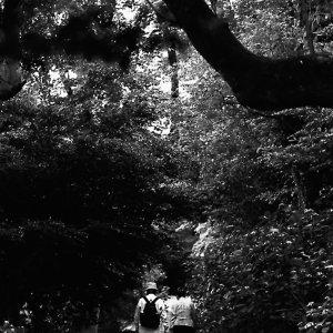 木立の中の道
