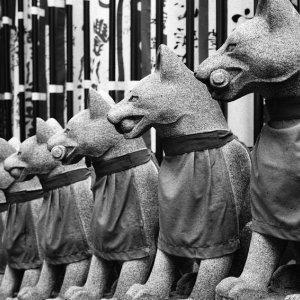 一列に並んだ狐の石像