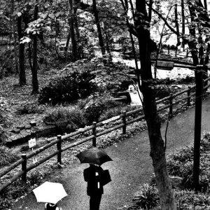 林試の森公園の小道を歩く父と娘