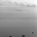 Silhouettes Of Fishing Boats