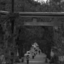 Torii At The Approach To Izumo Taisha @ Shimane