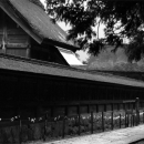Woman Walking Beside The Main Hall Of Izumo Taisha @ Shimane