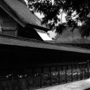 Woman Walking Beside The Main Hall Of Izumo Taisha