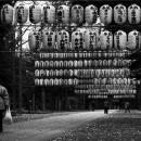 大国魂神社の提灯