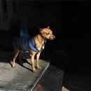 Dignified Dog @ Taiwan