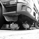 Cats Under The Truck @ Tokyo