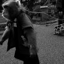 Monkey On Leash Was Walking @ Tokyo