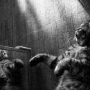 Cat In The Mirror