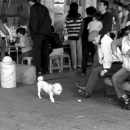 An Unleashed Dog And Old Man @ Taiwan