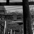 Torii Of Suwa Jinja @ Nagasaki