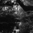 木立の中に伸びる道