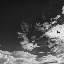 Silhouette Of A Bird In The Cloud