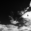 Silhouette Of A Bird In The Cloud @ Okinawa