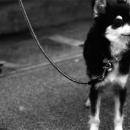 Leashed Dog Was Waiting